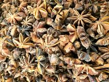 Star anise or chinese Ster anise Royalty Free Stock Images