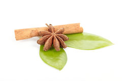 Star Anise, cinnamon and and green leave on white Royalty Free Stock Photography