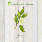 Star anise, essential oil label, aromatic plant Royalty Free Stock Image