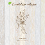 Star anise, essential oil label, aromatic plant Royalty Free Stock Photos