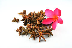 Star anise and flower Royalty Free Stock Images