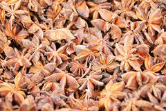 Star anise flowers background Stock Photos