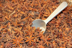 Star anise fruits and seeds Stock Image