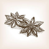 Star anise hand drawn sketch style vector Royalty Free Stock Images
