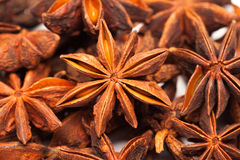Star anise or Illicium verum. Collection of star anise or Illicium verum over white Royalty Free Stock Photo