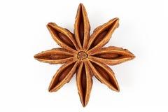 Star anise Illicium verum Royalty Free Stock Images