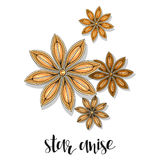 Star anise isolated object sketch. Spice for food. Culinary seasoning Stock Images