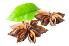 Star anise. isolated Royalty Free Stock Photos