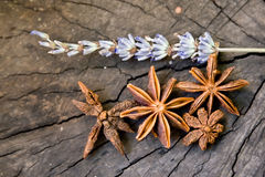 Star anise. And lavender branch Royalty Free Stock Photo