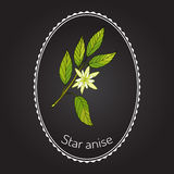 Star anise. Seed, or Chinese  (illicium verum), aromatic plant. Vector illustration Royalty Free Stock Image