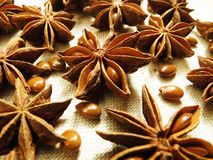Star Anise and seed Stock Photos