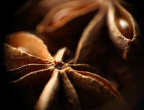 Star anise seeds. Macro. Blurred background Stock Image
