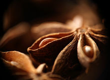 Star anise seeds. Macro. Blurred background Stock Photos