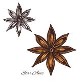 Star anise spice sketch of badian fruit and seed. Star anise sketch of badian spice cooking ingredient. Anise fruit with seed isolated icon for food seasoning stock illustration