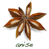Star anise spice fruit and seeds Stock Photos