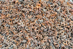 Star Anise Spice Group Stock Photography