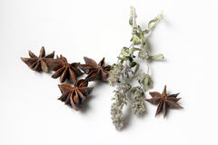 Star anise spice and mint Stock Photos
