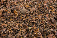 Star Anise - Spices - Background Stock Images