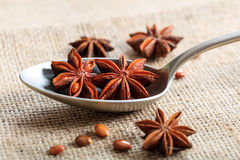 Star anise in a spoon Royalty Free Stock Photos