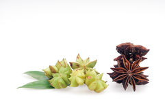 Star Anise. On a white background royalty free stock photo