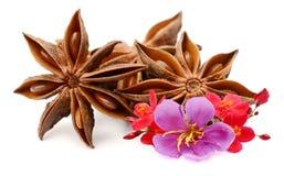 Star anise on white background. Aroma, eating royalty free stock photo