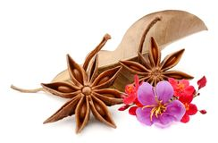 Star anise on white background. Aroma, eating stock photography