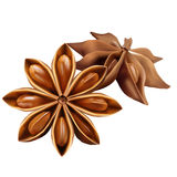 Star anise on the white Stock Image