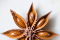 Star aniseed Royalty Free Stock Photography
