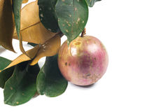 Star apple or cainito Stock Photos
