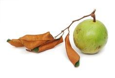 Star-apple fruit Stock Photography