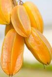 Star apple fruit. Fresh yellow star apple fruit in thailand Royalty Free Stock Image