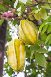 Star apple Royalty Free Stock Photography