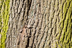 Star bark of a tree in the forest Stock Photo