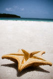 Star on the beach Royalty Free Stock Image