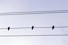 Star birds on a power line. Three star birds on a power line stock photo