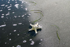 Star of the Black Sea - 5 Royalty Free Stock Images