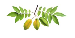 Free Star Carambola Or Averrhoa Carambola With Stem And Green Leaves Pattern Isolated On White Background With Clipping Path Royalty Free Stock Photography - 153442607