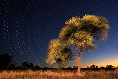 Star circles. With Camel thorn (Acacia erioloba) tree in foreground, Kalahari, South Africa Royalty Free Stock Image