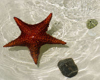 Star fish. Seen through clear water Royalty Free Stock Photography