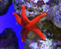 Star fish Stock Photos