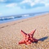 Star fish Royalty Free Stock Photos
