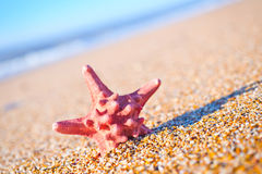 Star fish Royalty Free Stock Image