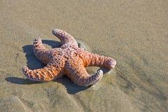 Star fish. Star fisth on a beach stock photo
