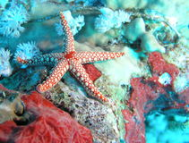 Star fish. The colours and composition created naturally by this scene had to be captured Stock Image