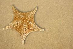 Star fish on the beach Royalty Free Stock Images