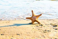 Star fish on the Beach Stock Photo