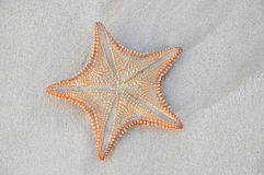 Star fish on caribbean beach paradise. Exotic star fish washed up on tropical island with the incoming tide stock image