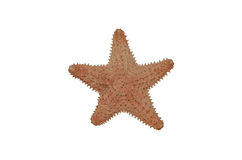 Star fish dry isolate Stock Photography