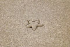 Starfish embossed in sand tracing a perfect star shape stock photography