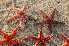 Star fish formation Royalty Free Stock Images